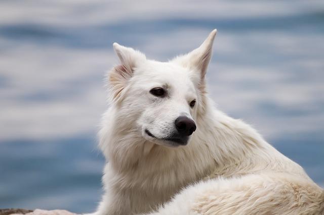How does dog hear world around it?