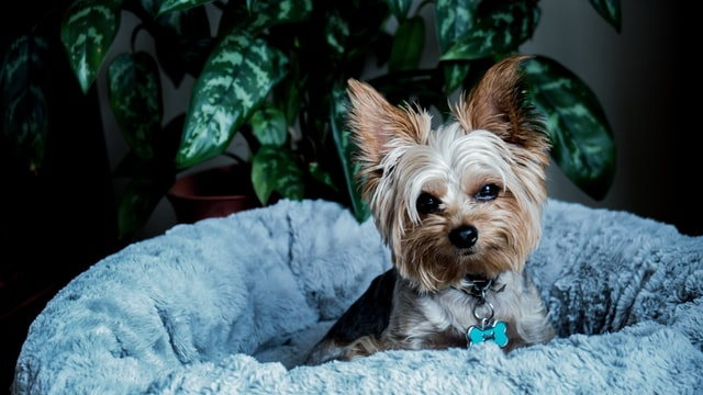 How to choose the right bed met for your dog